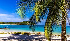 wakacje-pod-palmami