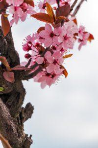 kwiaty-na-wiosne