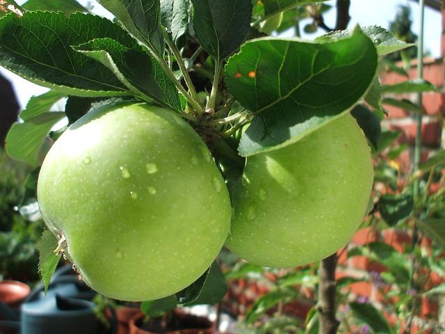 przepisy-na-przetwory-z-jabłek
