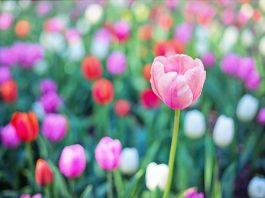 rozkwitaj wiosną