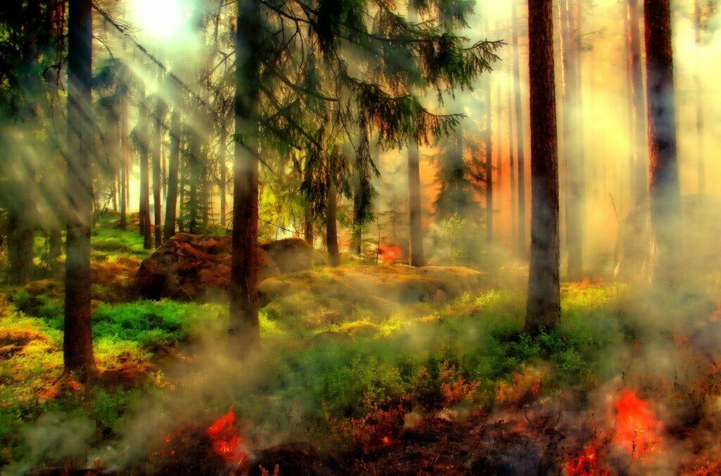 Płonie Biebrzański Park Narodowy
