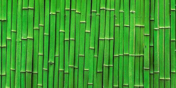 ekstrakt z pędów bambusa
