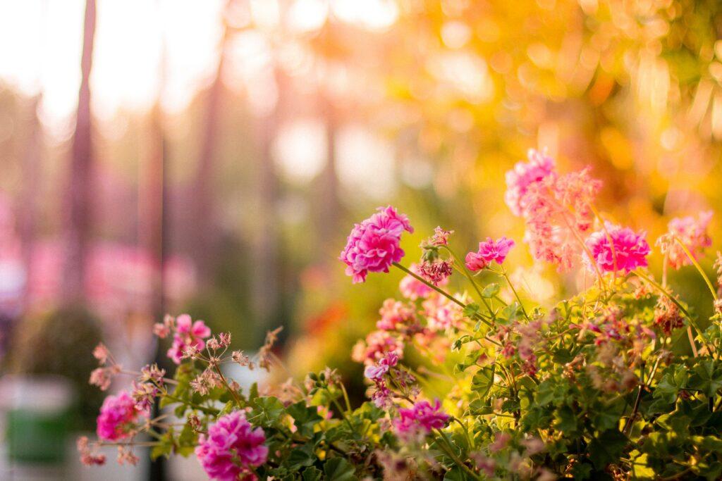 jak prace ogrodowe pozytywnie wpływają na samopoczucie
