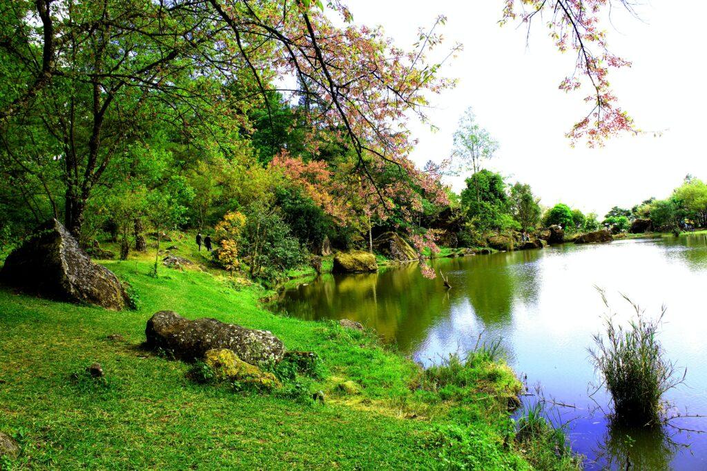 Jak prace ogrodowe wpływają na nasze zdrowie