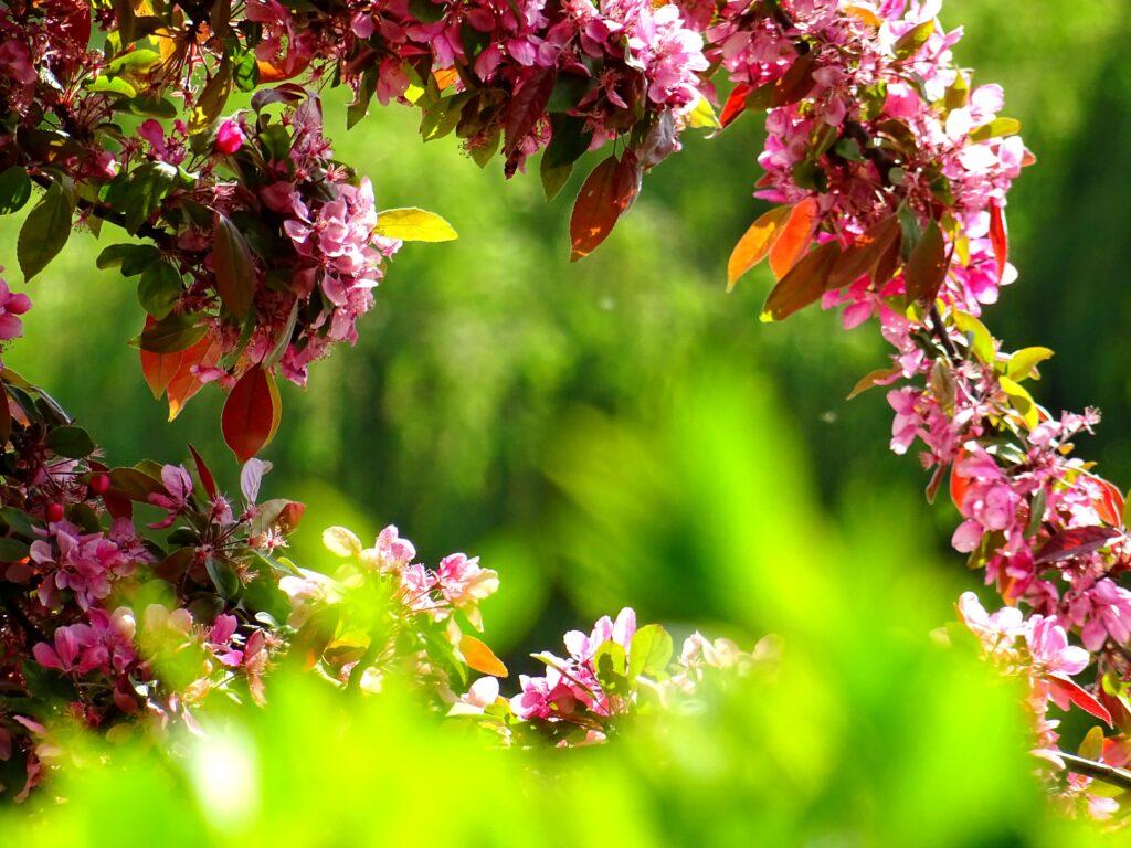 Na co zwrócić uwagę przy wyborze roślin do ogrodu