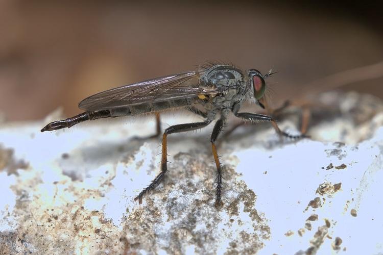 Inwazja meszek i komarów